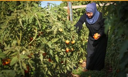 image-palestine-developpement-agricole-Cisjordanie-2015